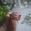 Thumbnail: The Janet Pink Sapphire & Diamond Ring