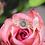 Thumbnail: Bella Diamond Ring