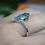 Thumbnail: 4ct Swiss Blue Topaz Ring