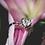 Thumbnail: Diamond Heart Ring