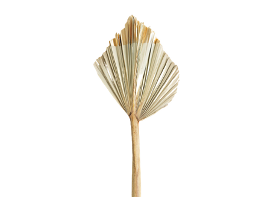 Gold Dipped Palm Spear