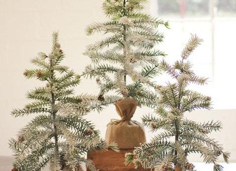 Pine Tree in Burlap Pot