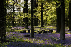 forest-purple-villa-hellebosch.jpg