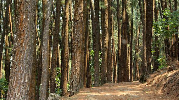 wood-3284608.jpg
