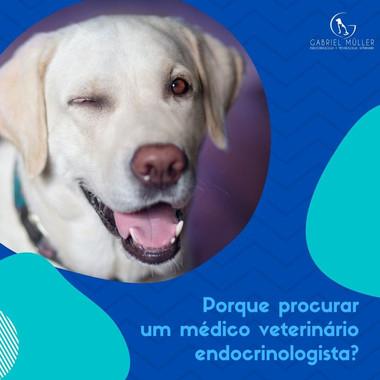 Gabriel Müller | Endocrinologia e Metabologia Veterinária Veterinário