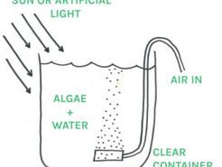 Algae Investigations Pt.1 – Carbon Dioxide