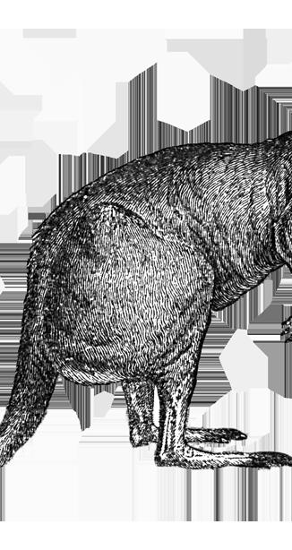 kangaroo2 - small.png