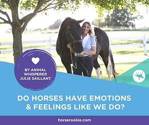 FB-horse emotions article horse rookies.