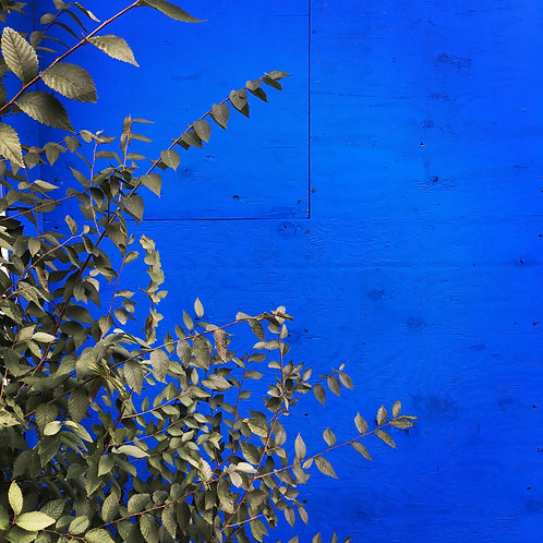 Blue makes happy