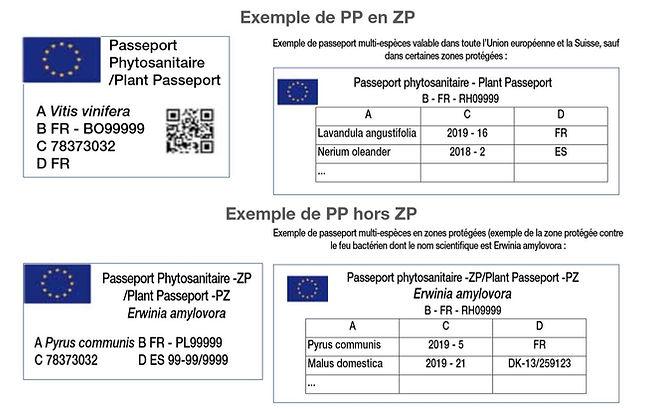 passeport phyto.JPG