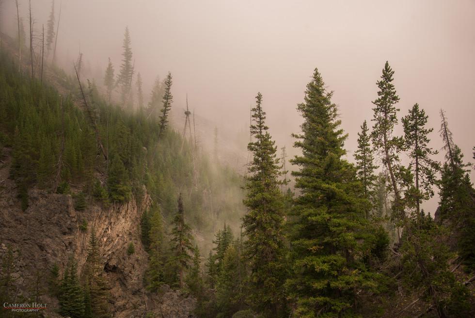 Misty Wilderness