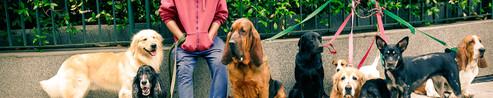Raul, the dog walker