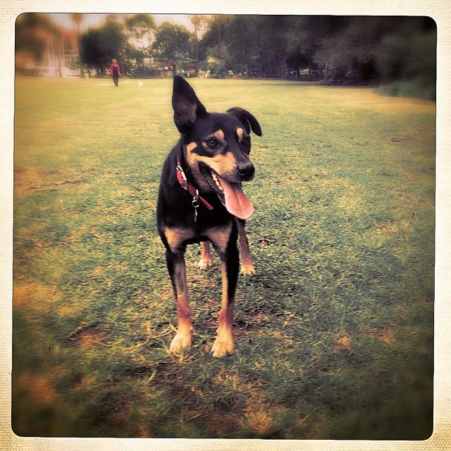 Instagram - Meet Rocco #designedphotography #dogslife #dogofinstagram #bestofthe