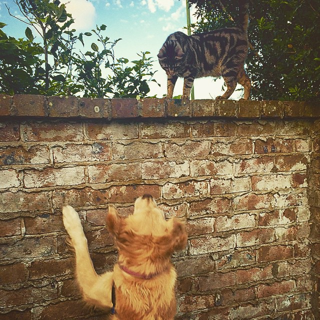 Instagram - Hello Neighbour! #designedphotography #catlove #dogslife #petsofinst