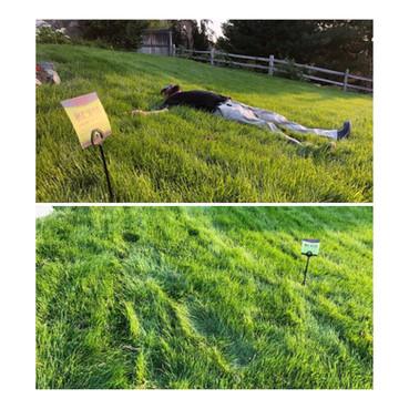 #grassangels
