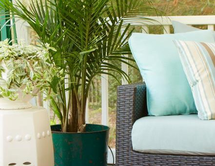 13 Beneficial Trees For Your Home