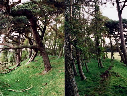 An Oval Grove by Iain Biggs