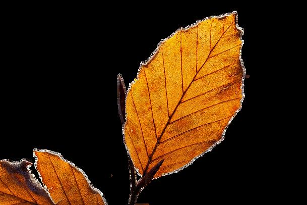 feuilles automne cerfogli .png