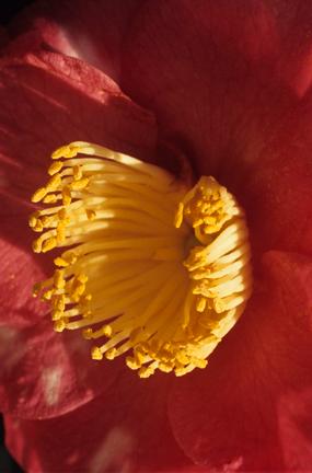 Flower u