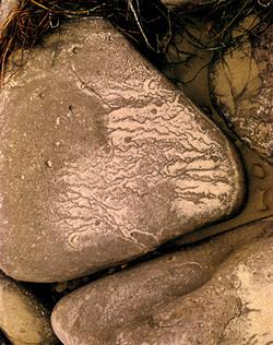 Nose Rock