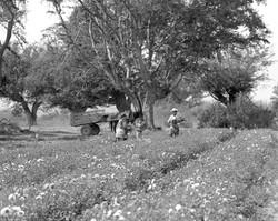 FLOWER FARMERS - 1974