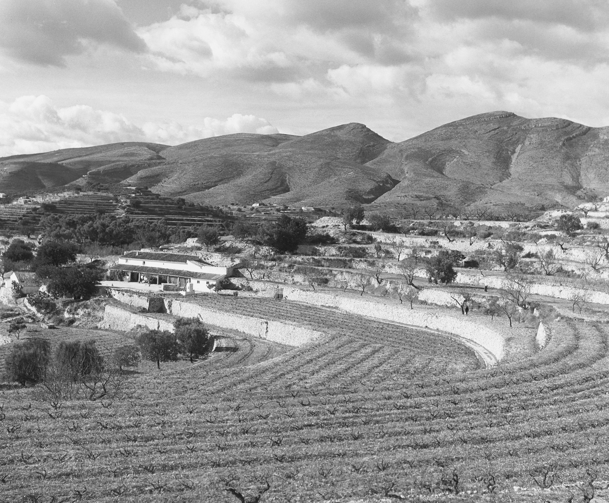 SPANISH VINEYARDS - 1961