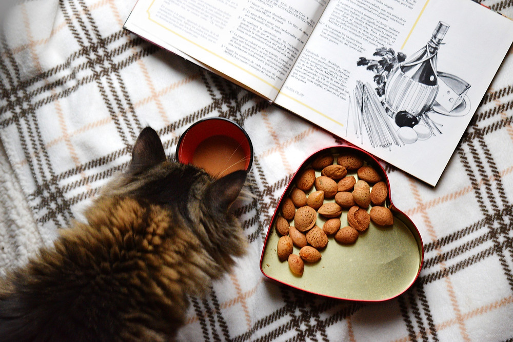 chat cuisine livre de recettes