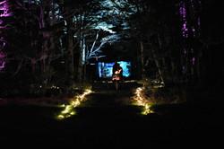 Forest Lodge night scene