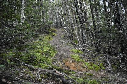 Native Beech Forest