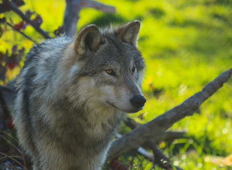 Free Wildlife Photography For Teachers, Students, Businesses, and Nonprofits