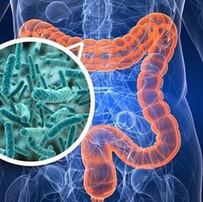Човешкия Микробиом