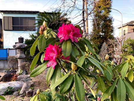 春の花の勢いが盛んです