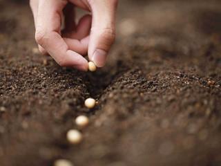 Como planejar a compra de insumos agrícolas