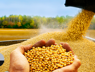 Colheita de soja é acelerada