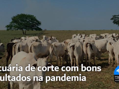 Pecuária de corte com bons resultados na pandemia