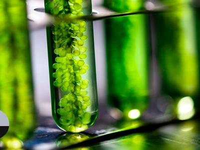 Impacto do biodiesel no agronegócio