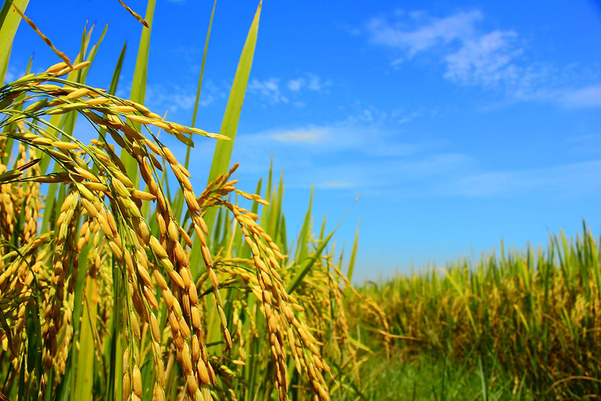 Additives and adjuvants for agrochemicals.jpg