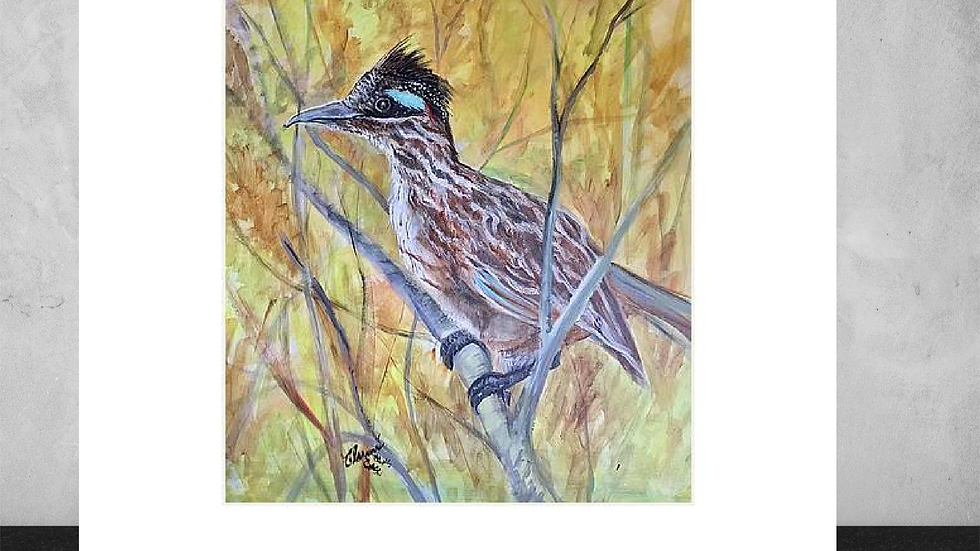 """Bushed Road Runner  5""""x7""""  White Matted Print"""