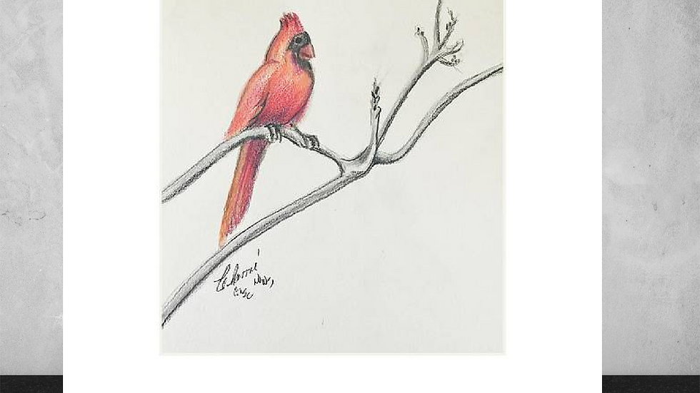 "Cardinal on Tree Limb  5""x7""  White Matted Print"