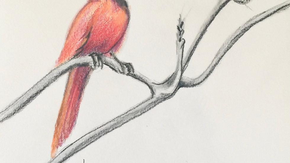 Cardinal on Tree Limb