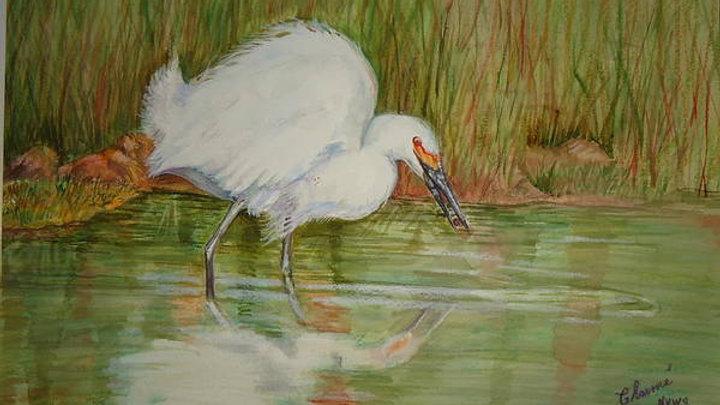 """White Egret Wading 11""""x14"""" Print"""