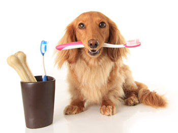 dog-dental.jpg