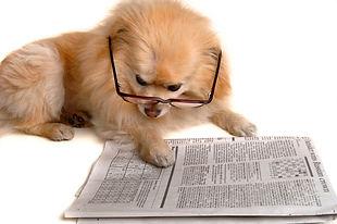 DogwNews.jpg