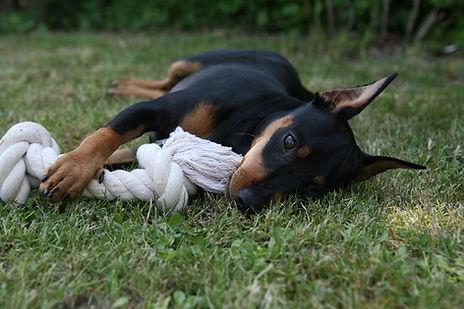 Schone Hund Karmen