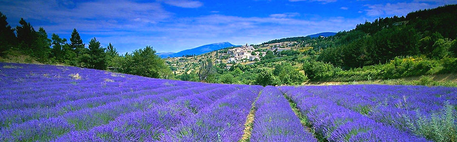 French Soaps Provence.jpg