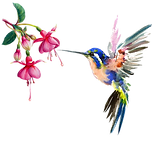 Frenchsoaps Humming Bird Transparent.png