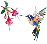 Frenchsoaps Humming Bird.png