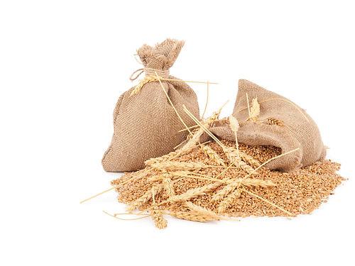 Triticum Vulgare (Wheat) Bran