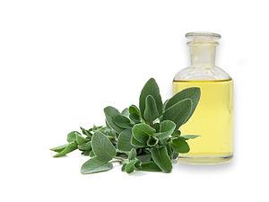 Salvia Officinalis Extract
