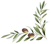 Olive Blossom Right Small Bottom.jpg